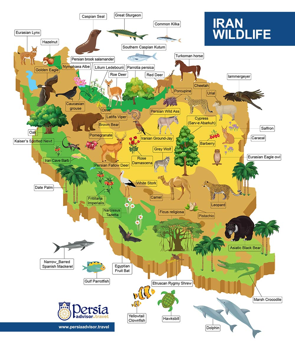 Iran Wildlife Infographic - Persia Advisor